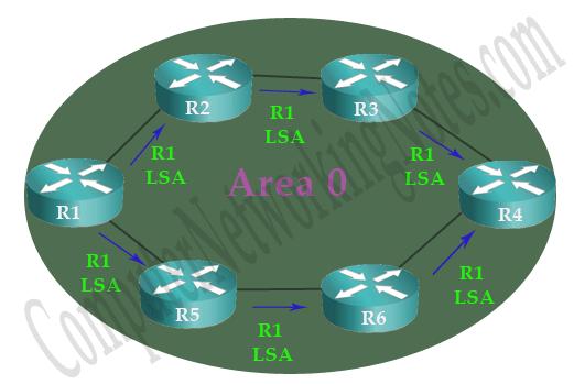 OSPF LSA Flooding