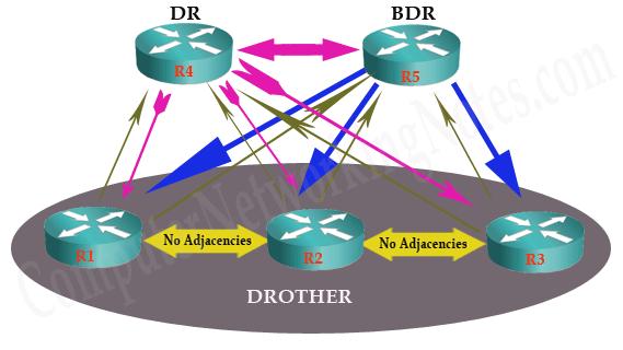 ospf DR BDR